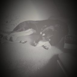 dog chipsi sleep
