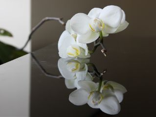 nature spring love emotions blosom