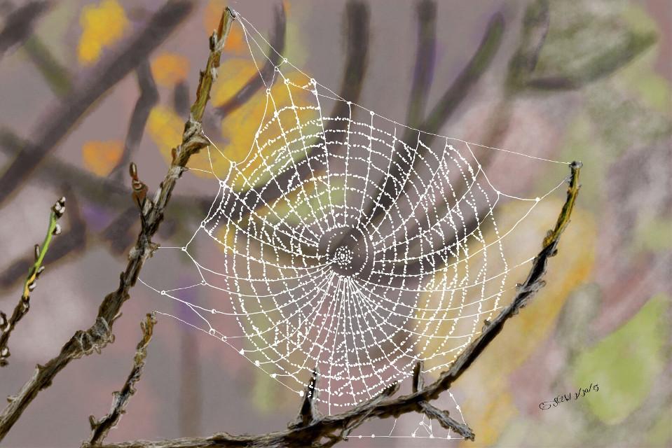 #dcspiderweb #digitalart  #drawing #draw #art #nature