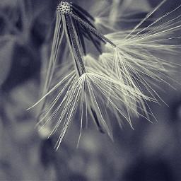 macro photography photography nature