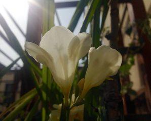 spring blossom beautifypicsart