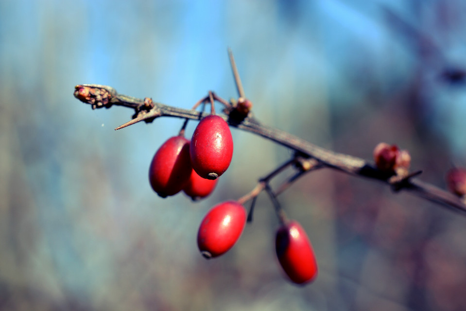 #photography #berries #macro #nature #emotion #colorful