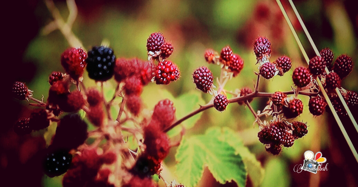 #berries #photography #fruit #nature