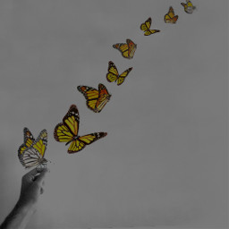 butterfly insect amzing art graphic