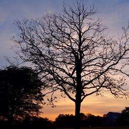 boysinatree sunset tree brothers guystuff