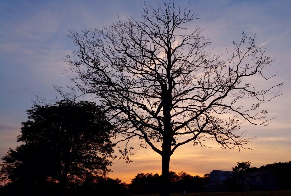 #boysinatree #sunset #tree #brothers #guystuff #silhouette