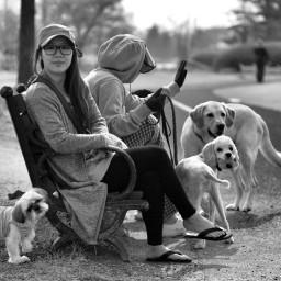 photooftheday dogs animals