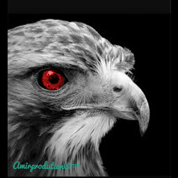 photography hdr hd hawk colorchanger