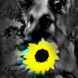 yellow garden blackandwhite photography nature