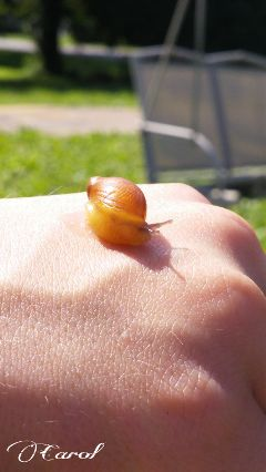 nature photography summer snail close