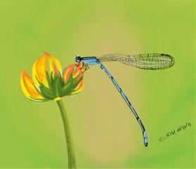 art drawing digitalart nature