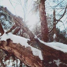 vintageivory winter snow