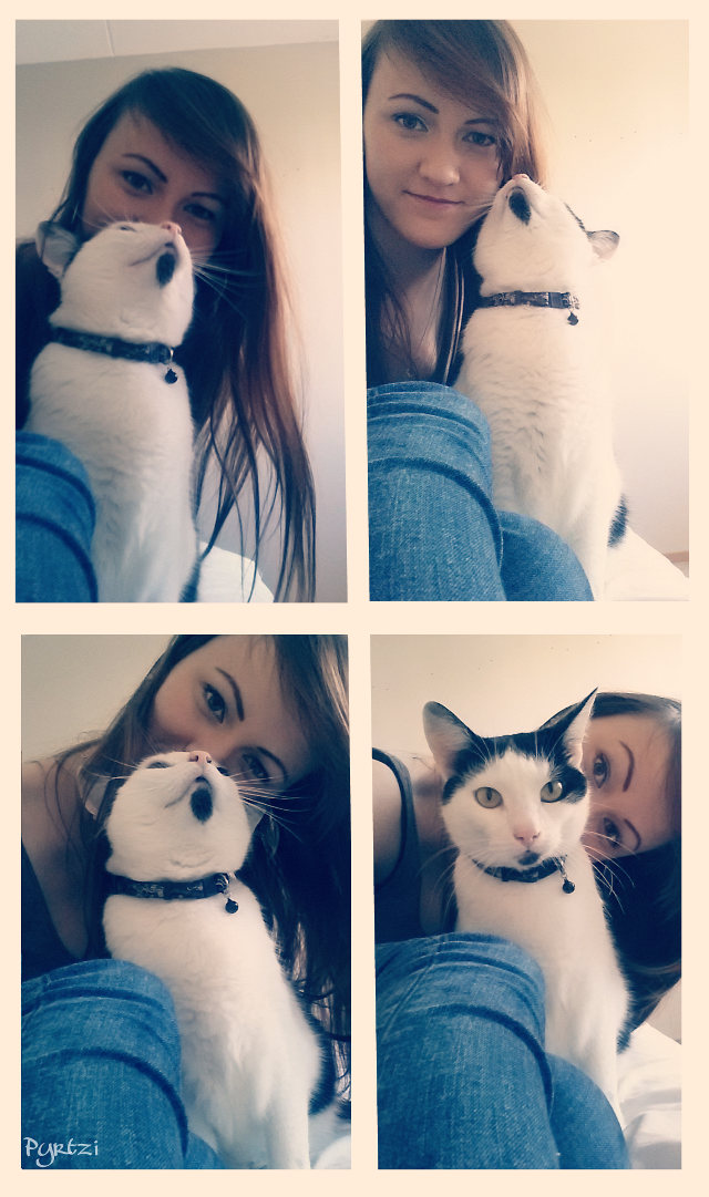 #gdactioncollage #cute #cat #petsandanimals #love