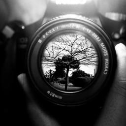 photography mirror tree canon camera