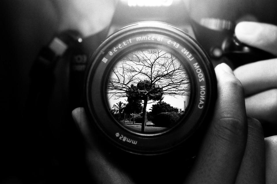#photography#mirror#tree#canon#camera#blackandwhite