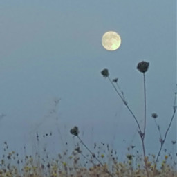 moon fullmoon sky evening night