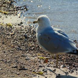 freetoedit photography nature bird wildlife