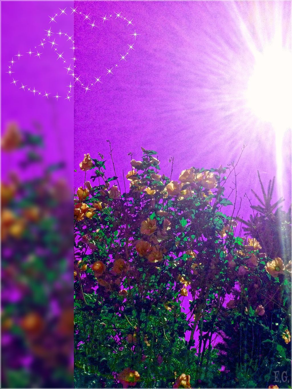 #sun #flowers #photography #hue #love  💜 This edit is for all of my friends here on PA ✌😘💕Much love to you!💜