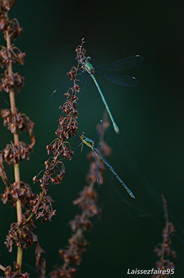 It takes two to tango...  #lowangle #nature #photography #summer #closeup #macro