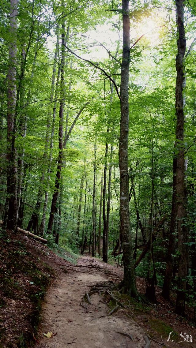 Quisiera estar de nuevo en ese lugar. I wish I could be there again #forest #nature #path #tree