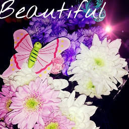 likeforlike repostforrepost butterfly flowers beautiful