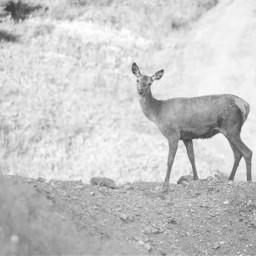 deer blackandwhite nature beautiful amazing cool art interesting photo photography like love follow feature summerstory summer landscape countryside wildlife wildlifephotography