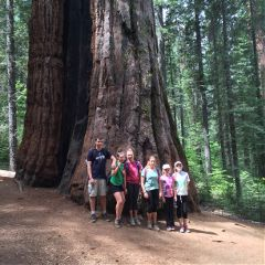 giantsequoia tree nature perspective