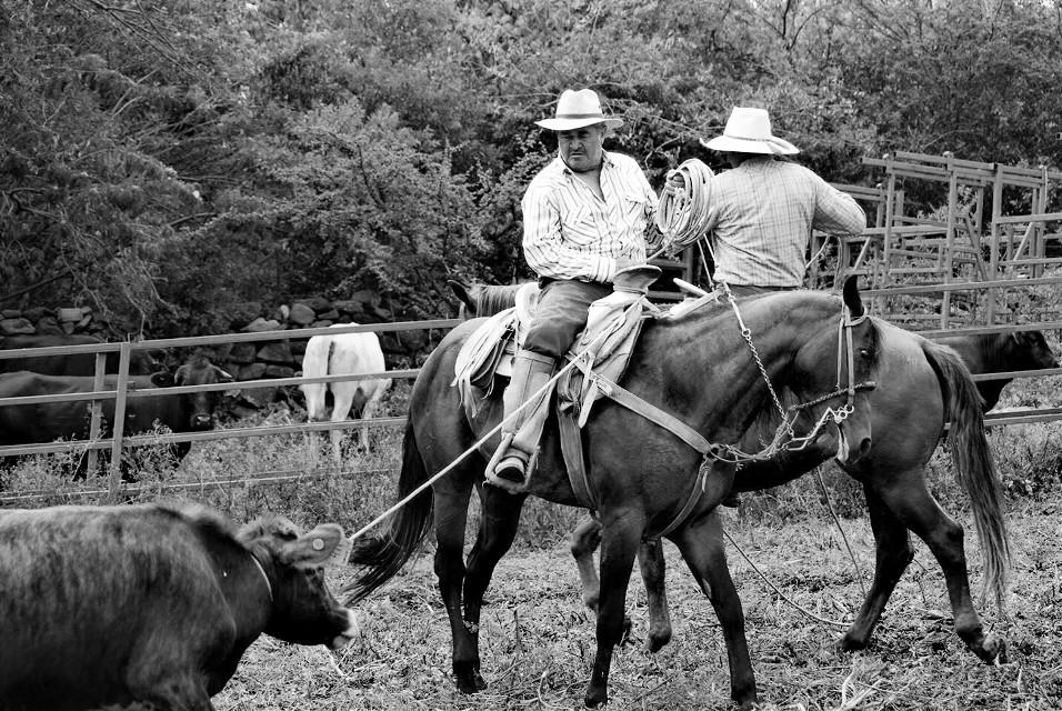 #photography   #horse  #mexico