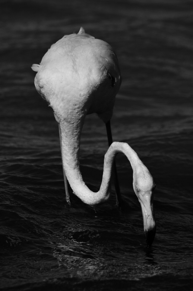 #photography #blackandwhite #nature #cute   #birds