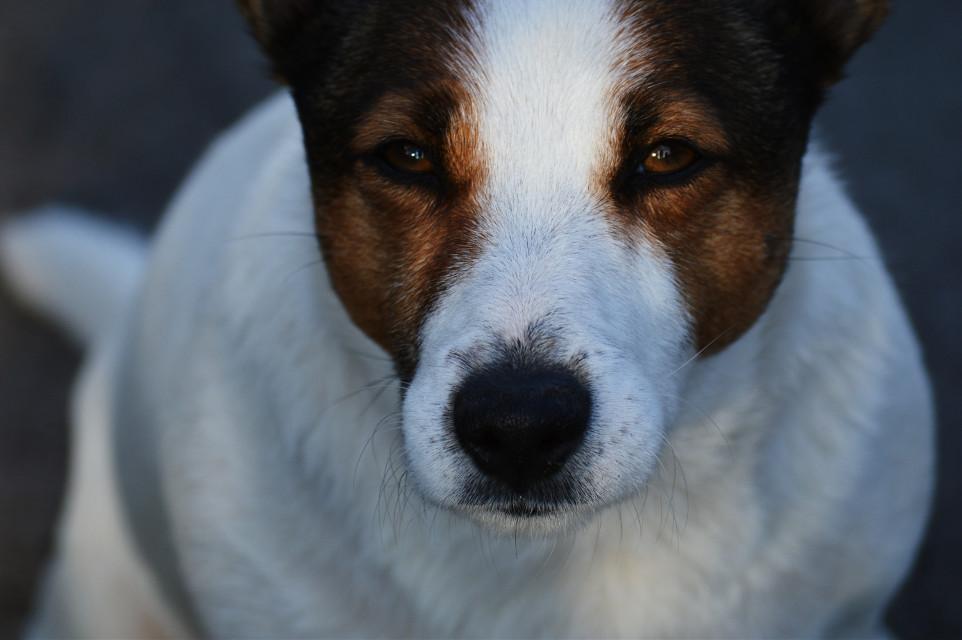 #petsandanimals  #dog #light #contrast #eyes #simple