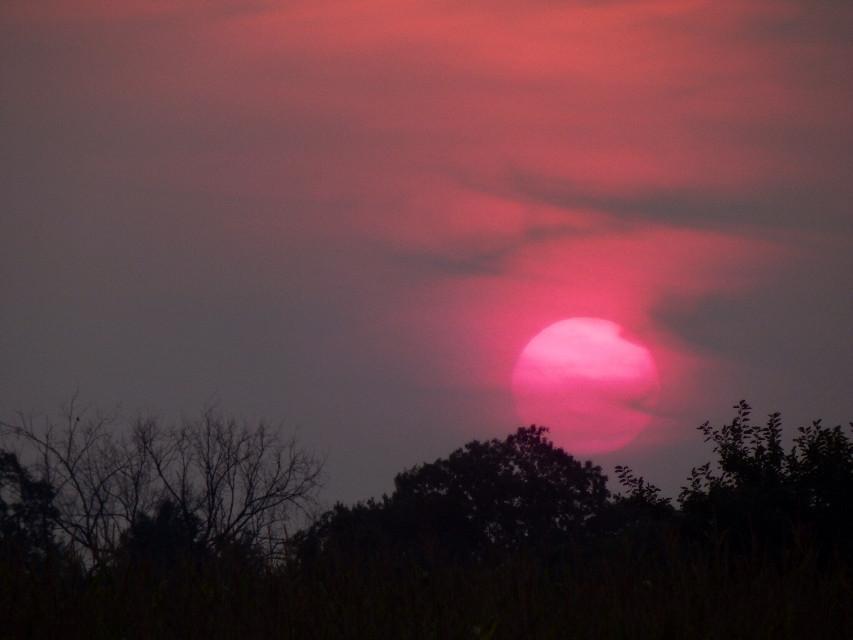 #Sunset #nature  #sky  #summer  #photography  #interesting  #pinksun