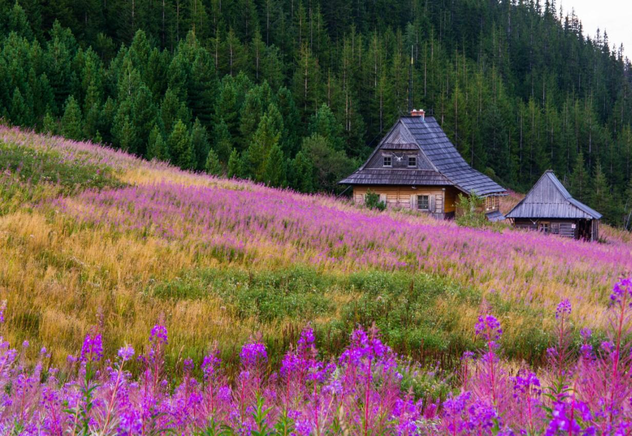 #Photography #nature #landscape #ruleofthirds