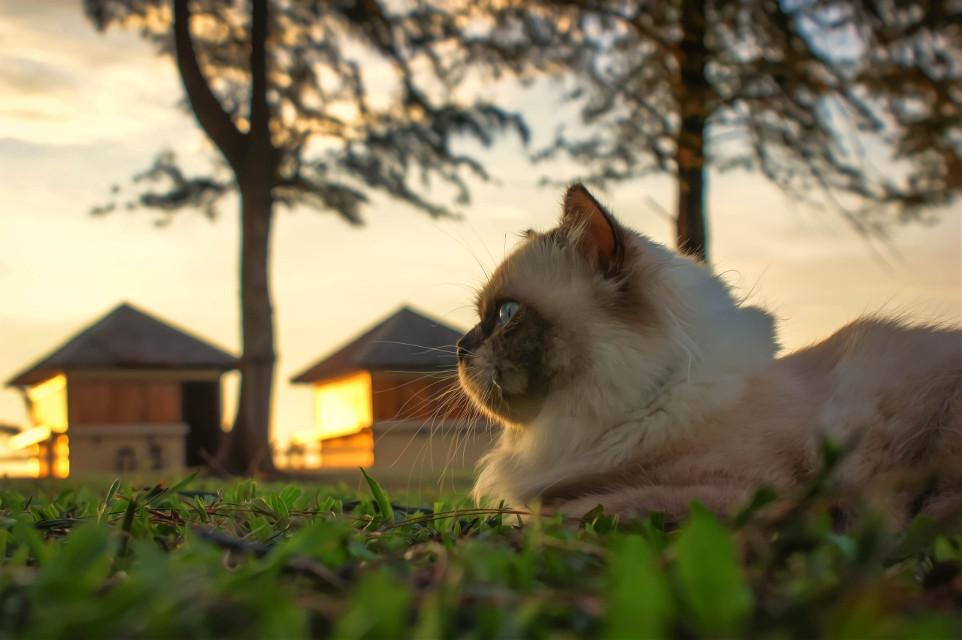 hipster sarsi cat#บ้านแมวหนวด #แมว #cats #chill #holiday  #amzingthailand #phuket #thailand #trip #travel #island #smi