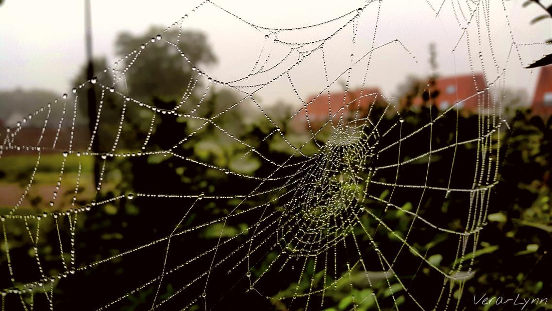 #motion #spiderweb #cobweb  #web  #drops #waterdrop #raindrop #raindrops #drop  #nature #photography #close-up #color  #nearandfar #blurredbackground