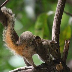 squirrel leaf dslr