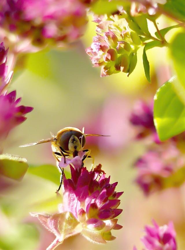 Good Morning 😊💕   #bee  #flowers  #september  #morning