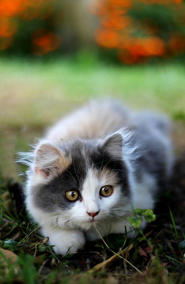 #beauty #petsandanimals #canon #photography #colorful #cat #sweet #shoot