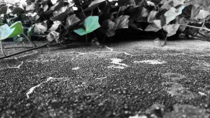 nature photography blackandwhite