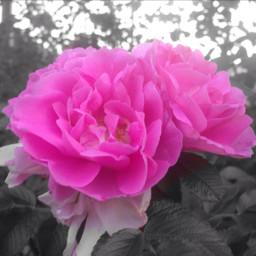colorsplash flower