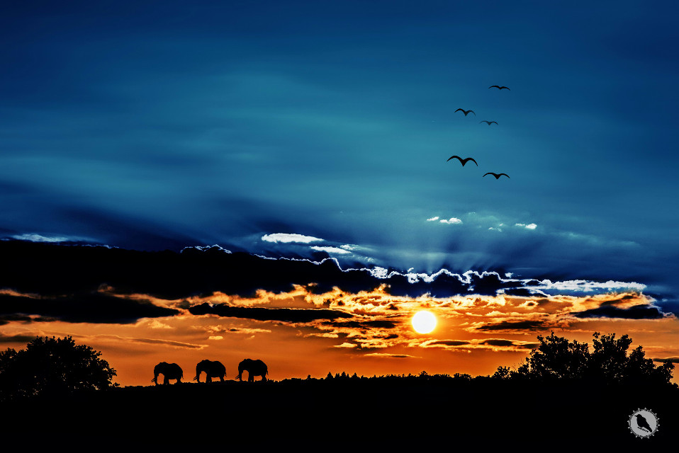 A little out of Africa.  #saturated #sunset #sky
