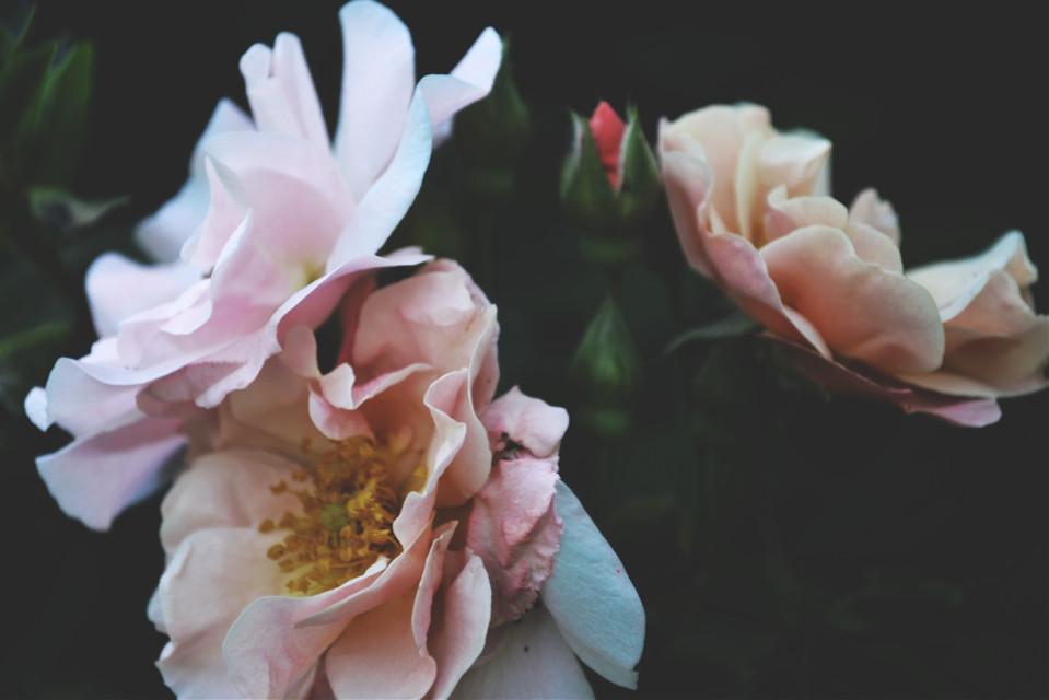 #flower #nature #freetoedit