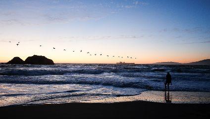 birds ocean freetoedit sf