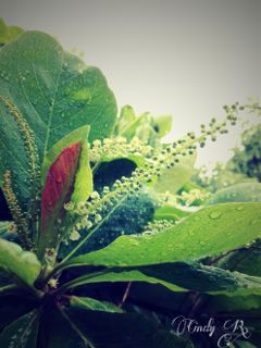 rain photography nature flower green