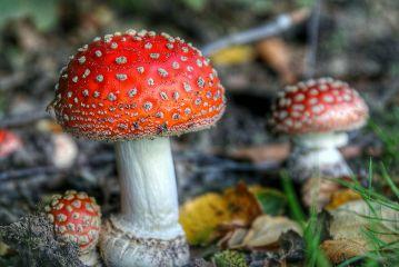 hdr autumn photography nature mushroom