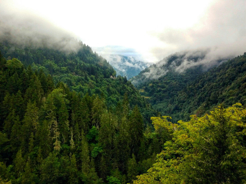 #forest #green #mountain #cloud #tree  #travel #photography  #nature  #faraway