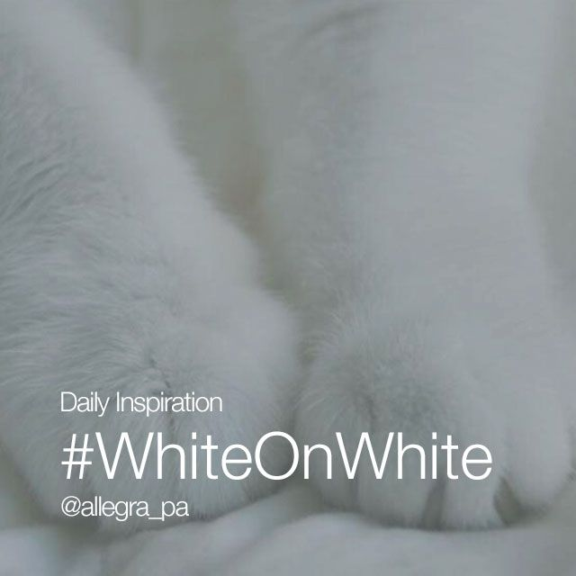 #whiteonwhite daily hashtag