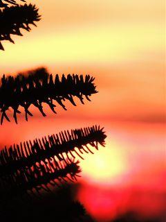 nature emotions sunset sun depthoffield
