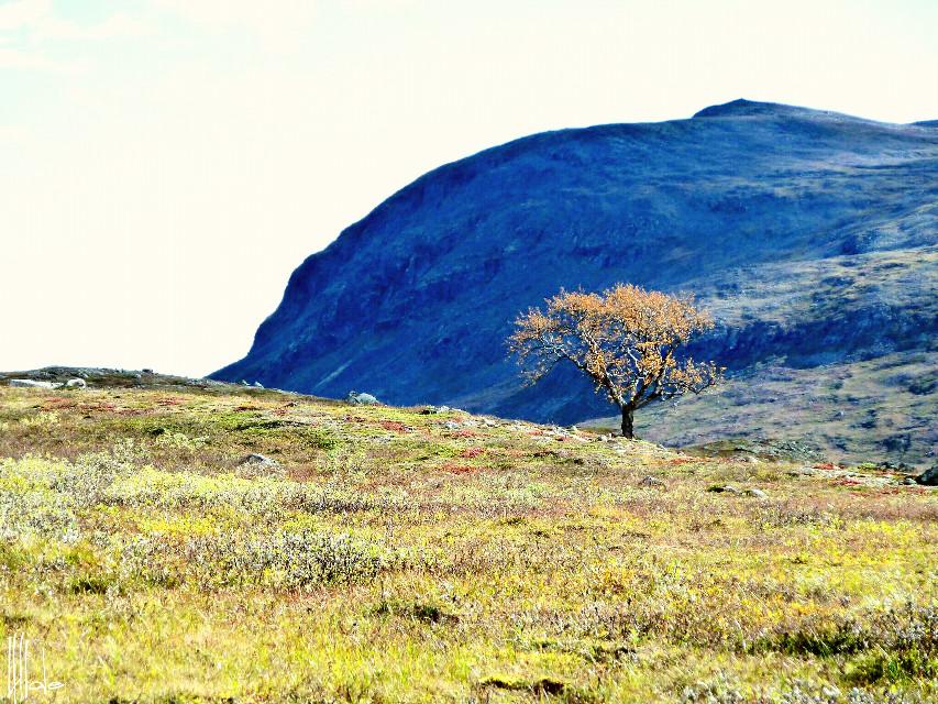 #nature #mountains