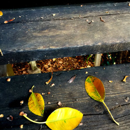 photogtaphy nature leaves autumn