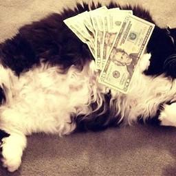 richkittycat